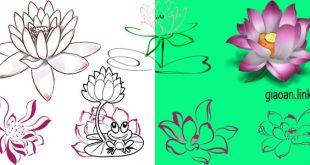 Hình hoa sen png