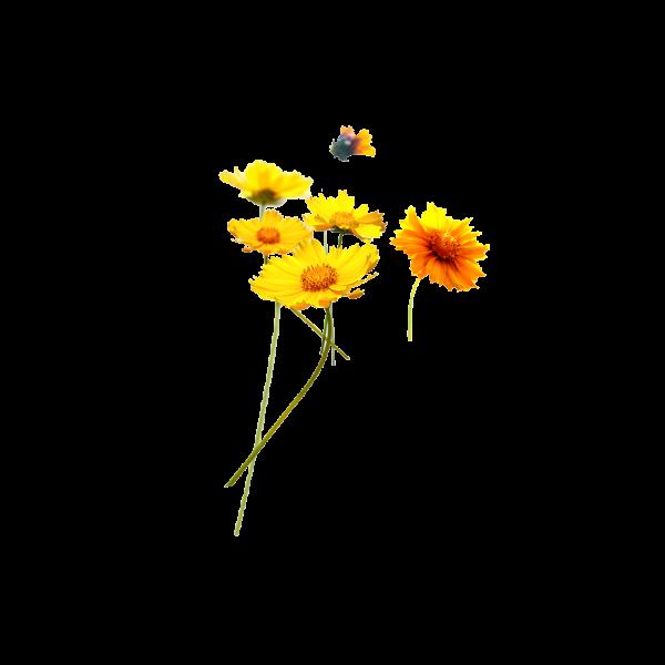 Hoa nhái vàng