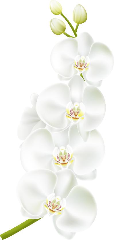 hình hoa lan tách nền png đẹp