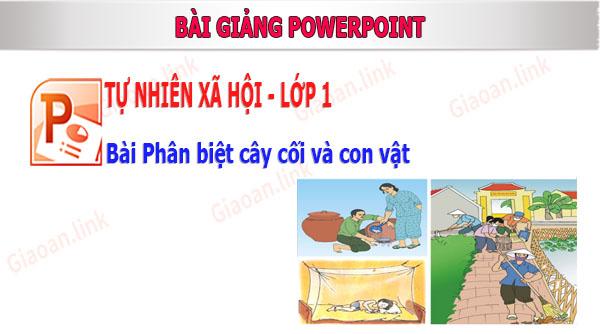 bai giang tnxh lop 1 bai phan biet cay coi con vat