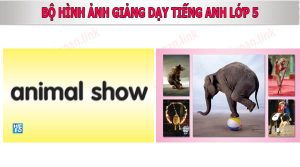 bo hinh anh day tieng anh lop 5